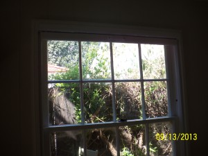 Disappearing Window Screens
